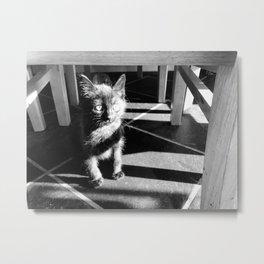 Scruffy Cat Metal Print