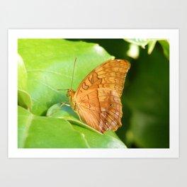 Butterfly 8 Art Print