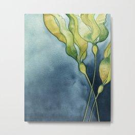 Bull Kelp Watercolor Metal Print