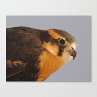 falcon Canvas Prints featuring Falcon by DiDi Higginbotham