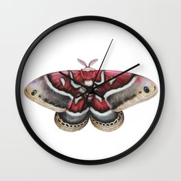Moth - HYALOPHORA GLOVERI - Glover's silk moth | Painting | Watercolour | Insect Wall Clock