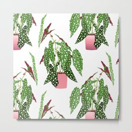 Simple Potted Polka Dot Begonia Plants in White Metal Print