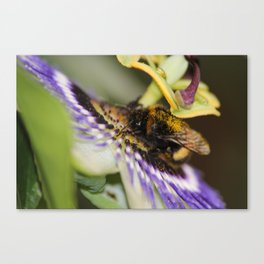 Lunch time at the flower Canvas Print