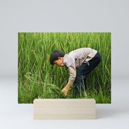 Rice Field Sapa Vietnam | Green Nature Photography Mini Art Print