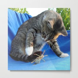 White Pawed Tabby Cat Playing With Winged Insect Metal Print