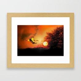 Stork in the sunset Framed Art Print