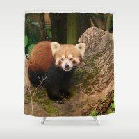 red panda Shower Curtains featuring Red Panda by MehrFarbeimLeben