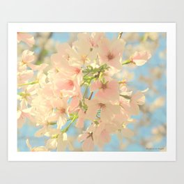 Yoshino Cherry Blossoms Art Print