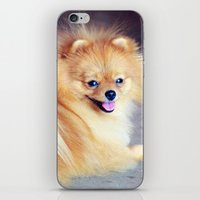 pomeranian iPhone & iPod Skins featuring PRECIOUS POMERANIAN by Allyson Johnson