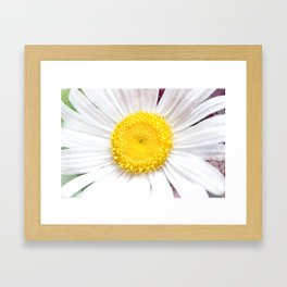 Daisy Flower Close-Up #1 #art #society6 Framed Art Print