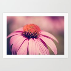 pink coneflower Art Print
