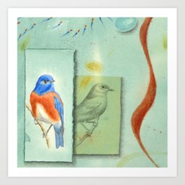 Talisman for Western Bluebirds Art Print