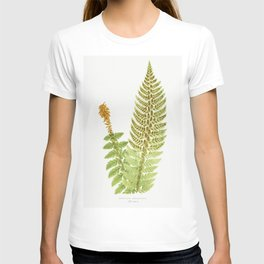 Aspidium Aculeatum from Ferns British and Exotic (1856-1860) by Edward Joseph Lowe T-shirt