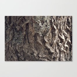 Tree Skin 1 /4 Canvas Print