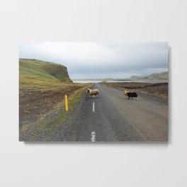 Sheep Crossing in Iceland Metal Print