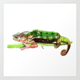 Panther Chameleon on a branch Art Print