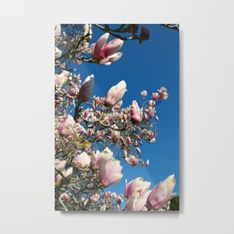 The Tulip Tree Metal Print