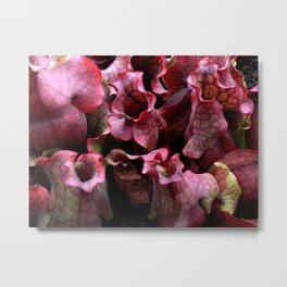 Carnivorous plant #1 Metal Print
