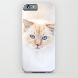 White ragdoll cat with blue eyes in snow, looking in camera iPhone Case