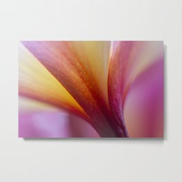 Panes of the Frangipani Metal Print