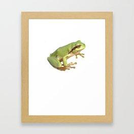 European Tree Frog Isolated Framed Art Print