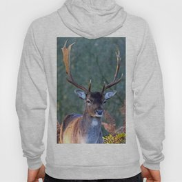 Stag Leader of the Herd 2 Hoody
