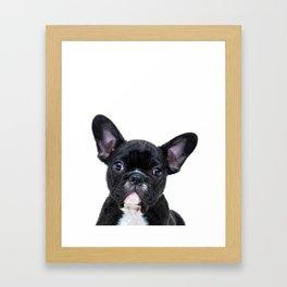 French bulldog portrait Framed Art Print