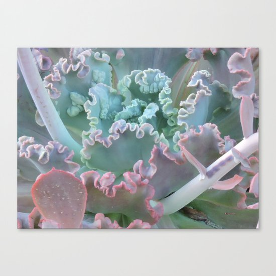 Succulent in the Sand Canvas Print