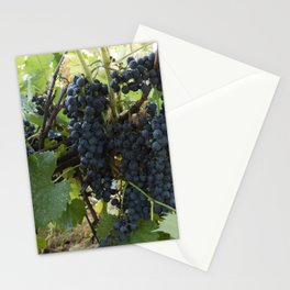 bunch of Isabella grapes in vineyard Stationery Cards