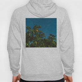 California Orange Tree III Hoody