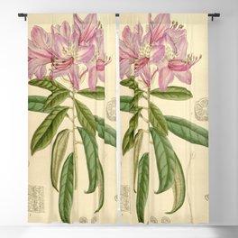 Rhododendron harrovianum 136 8309 Blackout Curtain
