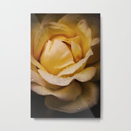 Invitation Yellow Rose Metal Print