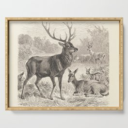 Antique Deer Scene in Nature Serving Tray