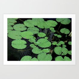 Nenuphar leaves in Chiang Mai, Thailand Art Print
