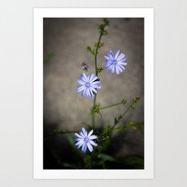 Chicory In The Concrete Jungle Art Print