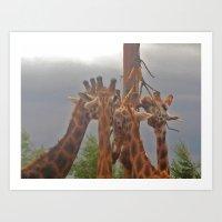 giraffes Art Prints featuring Giraffes by Bloon Images