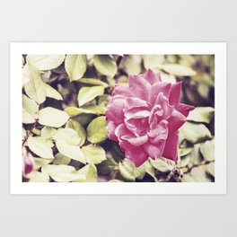 If only a Rose Art Print