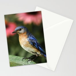 Perched Eastern  BlueBird Stationery Cards