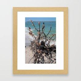 Sea Shell Samba I Framed Art Print