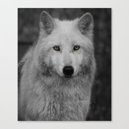 Wolf People of Cocolalla Canvas Print