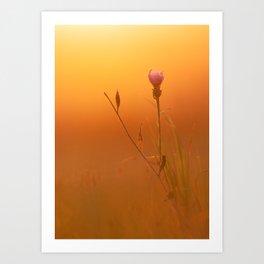 Beautiful sunrise behind a flower Art Print