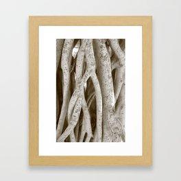 Banyan Tree Lahaina, Maui Framed Art Print
