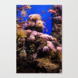 Sea Bed #2 Canvas Print