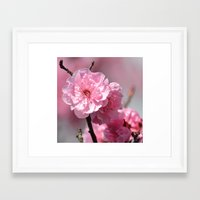 cherry blossoms Framed Art Prints featuring Cherry Blossoms by Zen and Chic