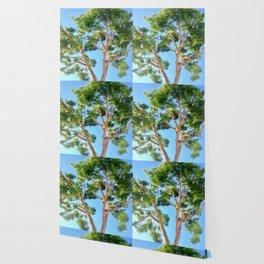 Sunseeker Wallpaper