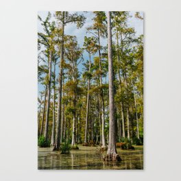 Charleston Cypress Gardens XIII Canvas Print