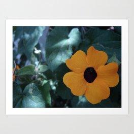Flowers #7 Art Print