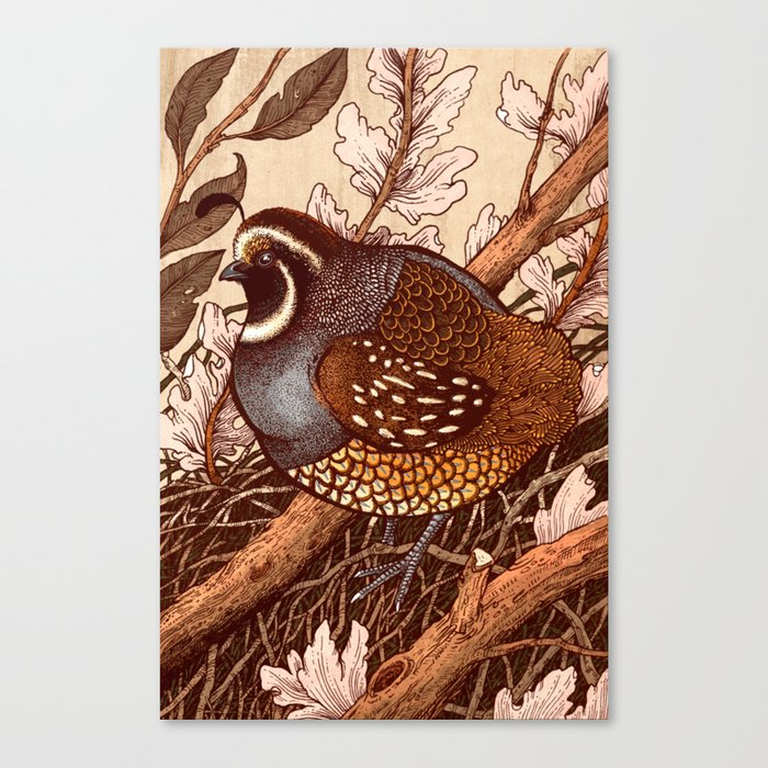 Little Quail Canvas Print