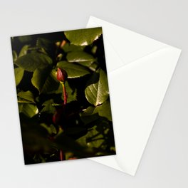 Growing Flower in the Queen Elizabeth Park's Rose Garden Stationery Cards