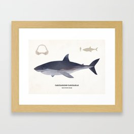 The Great White Shark Framed Art Print